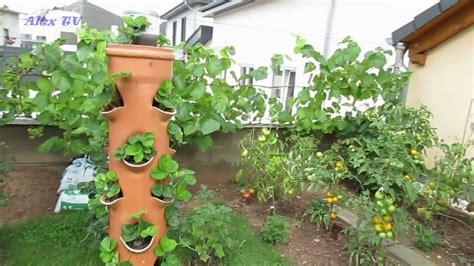 erdbeeren im rohr bauanleitung erdbeeren im rohr vertikale garten