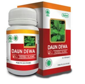 herba daun dewa hiu obat herbal anti kanker ramuan obat