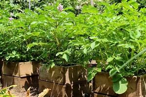 kartoffeln auf dem balkon pflanzen geht das With französischer balkon mit pflanzen für vertikale gärten