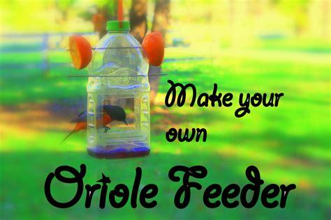promo oriole feeder picjpg