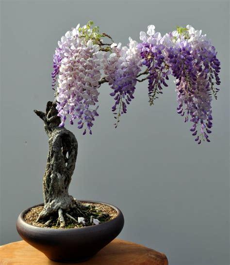 Bonsai Baum Pflanzen by Bonsai Baum Pflege Sorgen Sie F 252 R Eine Sch 246 Ne Pflanze