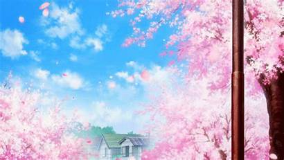 Cherry Blossom Sakura Pink Gifs Giphy