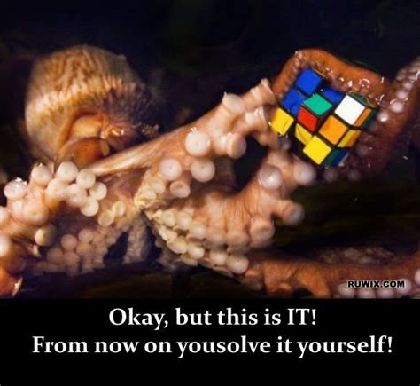 Octopus Meme Octopus Meme 28 Images What Do You Get When You Crossa