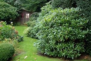 Arbuste À Feuillage Persistant : arbuste a feuillage persistant arbustes feuillage ~ Melissatoandfro.com Idées de Décoration