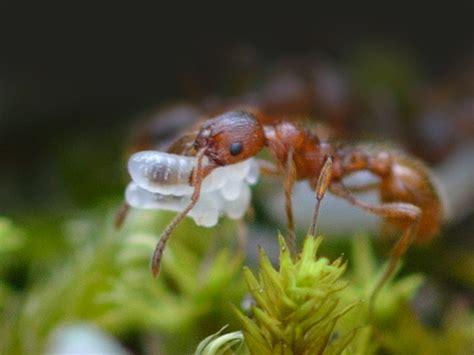 pflanzen gegen ameisen pflanzen gegen ameisen hausmittel gegen ameisen im garten und an pflanzen mittel gegen ameisen