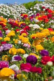 Colorful Spring Flower Gardens