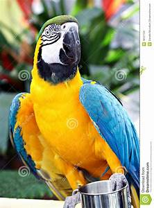 Yellow And Blue Parrot Stock Images - Image: 18127134