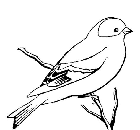 wild canary bird coloring pages  place  color