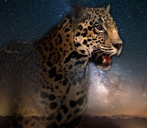 jaguar-shaman   Kahpi