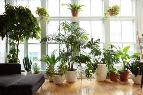 Best Windowsill Plants by 352 Best Images About Windowsill Plants On