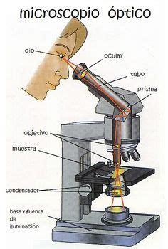 dibujo de microscopio  sus partes buscar  google