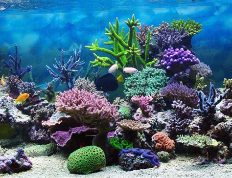 coral reef wallpaper underwater coral reef wallpaper wallpapersafari Underwater
