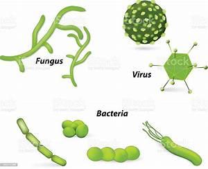 V U00edrus Bact U00e9rias E Fungos