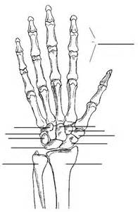Blank Hand Bone Anatomy Diagram
