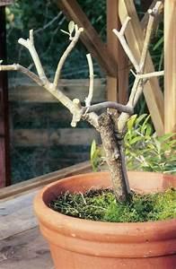Bäume Schneiden Wann : 220 besten b ume str ucher bilder auf pinterest ~ Lizthompson.info Haus und Dekorationen