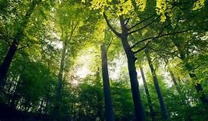 Foret à Bois : les plus beaux endroits visiter dans yvelines 78 ~ Nature-et-papiers.com Idées de Décoration