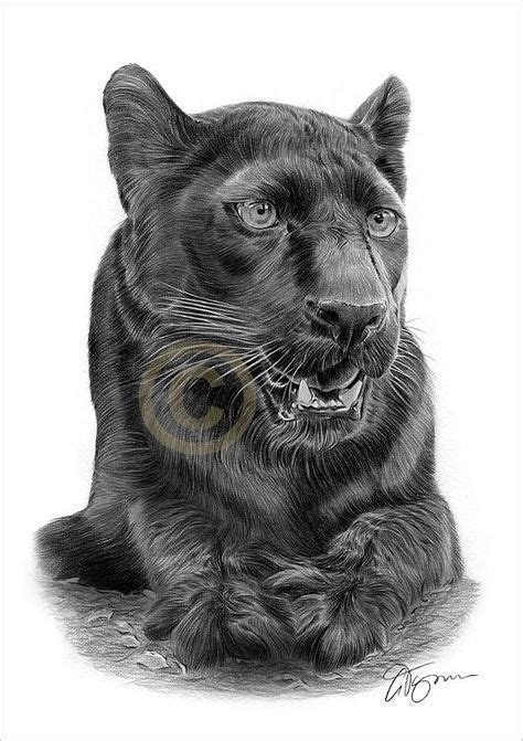 black panther artwork pencil drawing print artwork signed