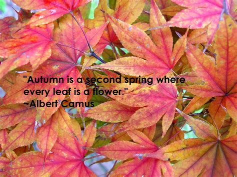 autumn quotes fall quotes and sayings quotesgram