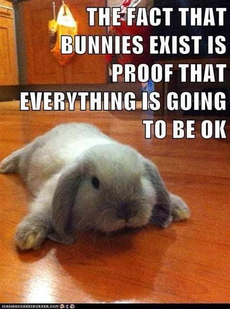 Rabbit Meme - funny rabbit memes one lop too many