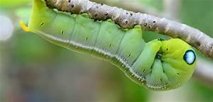 How is Silk Mad... Silkworm