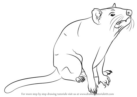 Learn How To Draw Tasmanian Devil (other Animals) Step By