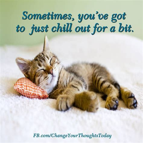 how to de stress you cat sometimes you ve got to just chill out for a bit take time for yourself de stress how do