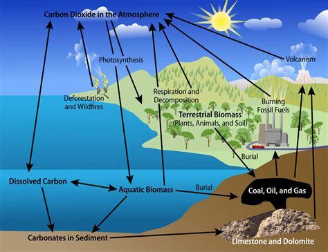 Diagram Carbon Cycle Diagram Kids