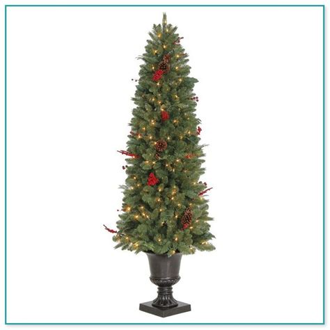 home depot live christmas trees for sale tree sale home depot 3