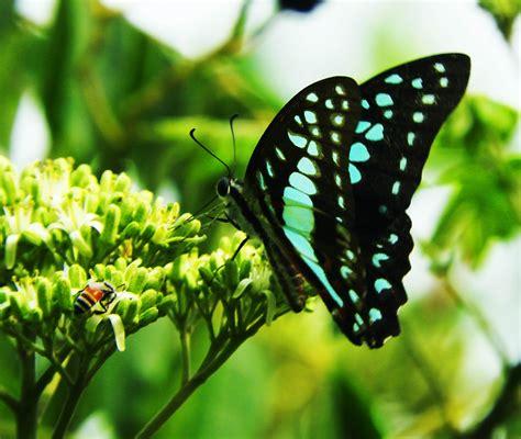 images nature wing leaf flower flying wildlife