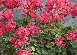 Jardiniere Fleurie Plein Soleil : jardiniere pour fleurs ~ Melissatoandfro.com Idées de Décoration