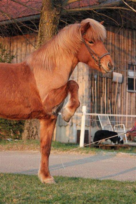 warum werden pferde geschoren schneiden hals fell