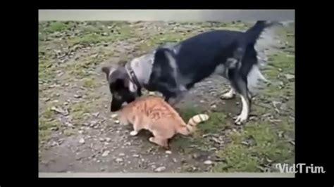 hunde katzen im angesicht der endlosen kriege hund