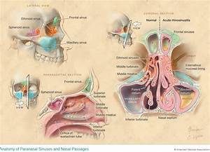 Anatomy Works From Certified Medical Illustrator Alison