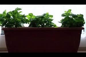 Kleine Fliegen Im Blumentopf Hausmittel : video fliegen vertreiben hausmittel helfen ~ Whattoseeinmadrid.com Haus und Dekorationen