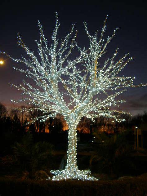 man  tree  lights entrance   brian green cc