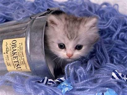 Adorable Kittens Lil Fanpop Kitten Cats Cat