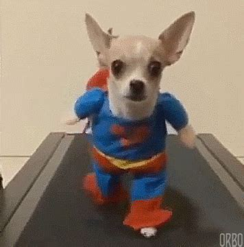 superman gifs find share  giphy