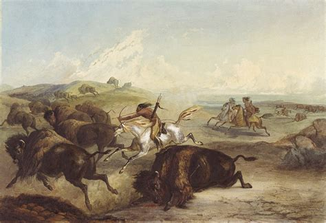 How Indians Hunt The Buffalo