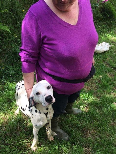 30 days dalmatian puppies for lovely dalmatian boy whitland carmarthenshire pets4homes
