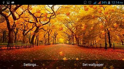 3d Autumn Fall Wallpapers Leaves Android Google