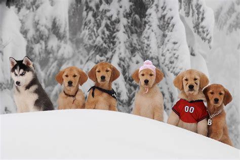 snow buddies dvd review smartcine
