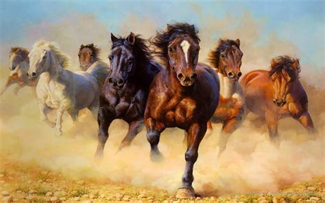 horses wild galloping hd animals 2400 resolution wallpapers13 desktop