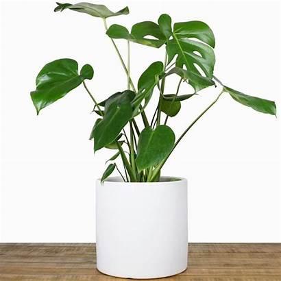 Indoor Pots Plant Pot Ceramic Flower Planters