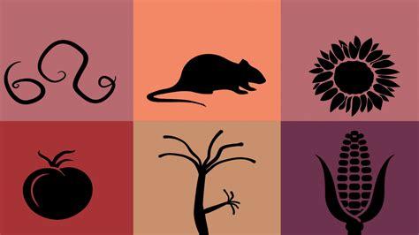 menagerie  model organisms college  biological