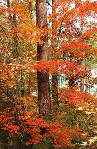 Harbison State Forest Columbia SC
