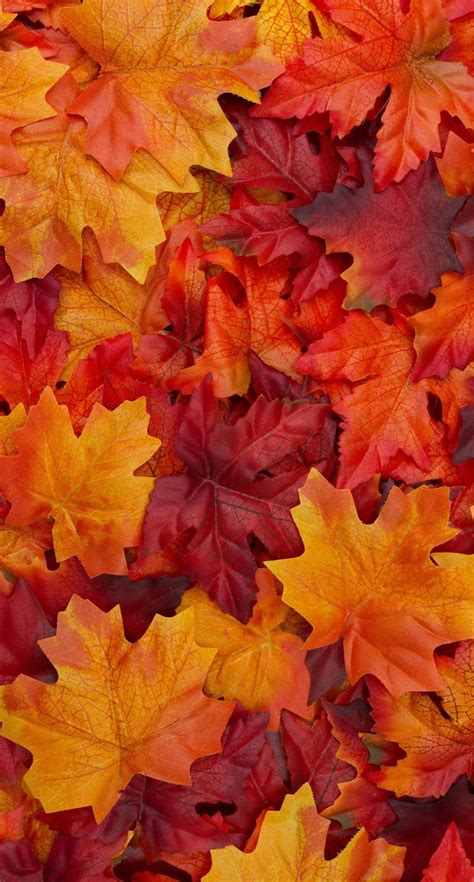 Autumn Leaves Fall Wallpaper Iphone X by Autumn Leaves Autumnal Flow In 2019 Fall Wallpaper