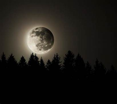 Moon Dark Forest 1080p Android Wallpapers Pantalla