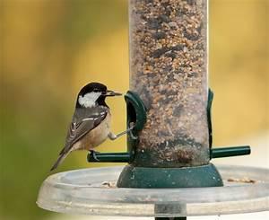 Graines De Tournesol Pour Oiseaux : mangeoire pour m sanges du jardin aidez vos m sanges l ~ Dailycaller-alerts.com Idées de Décoration