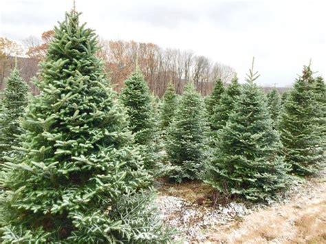 christmas tree farms upstate ny best 28 christmas tree farms buffalo ny christmas 5890