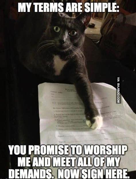 Shaved Cat Meme - 106 best images about cat memes on pinterest
